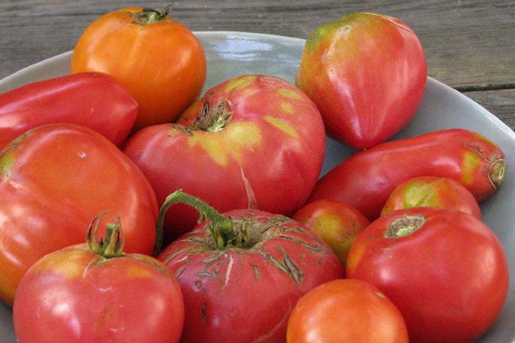 Un estudio científico determinó que las plantas pueden percibir 'sufrimiento'