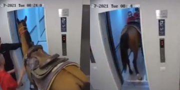 caballo ascensor