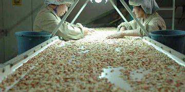VANGUARDIA. El sector manicero incorpora tecnología y buenas prácticas agrícolas y de manufactura que lo posicionan como líder en el mercado internacional (Foto de La Voz del Interior).