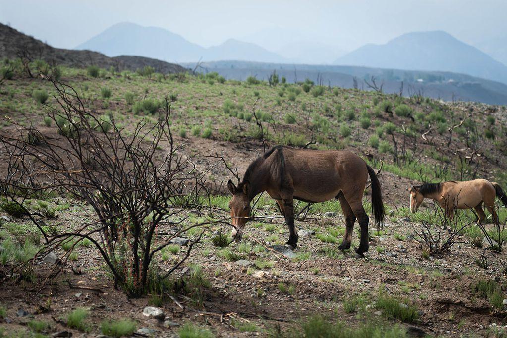 """Hay riesgo """"extremo"""" de incendio en Potrerillos por la falta de lluvias y otras zonas de Mendoza están complicadas"""