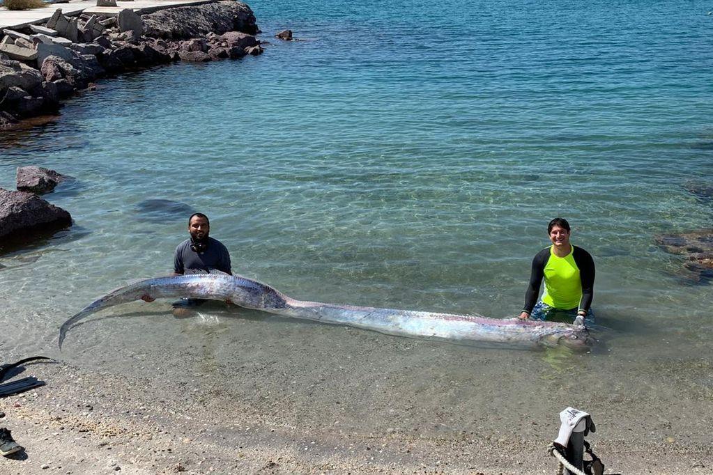 El ejemplar de casi 4 metros fue hallado en playas de Baja California. Aseguran que su aparición presagia terremotos.