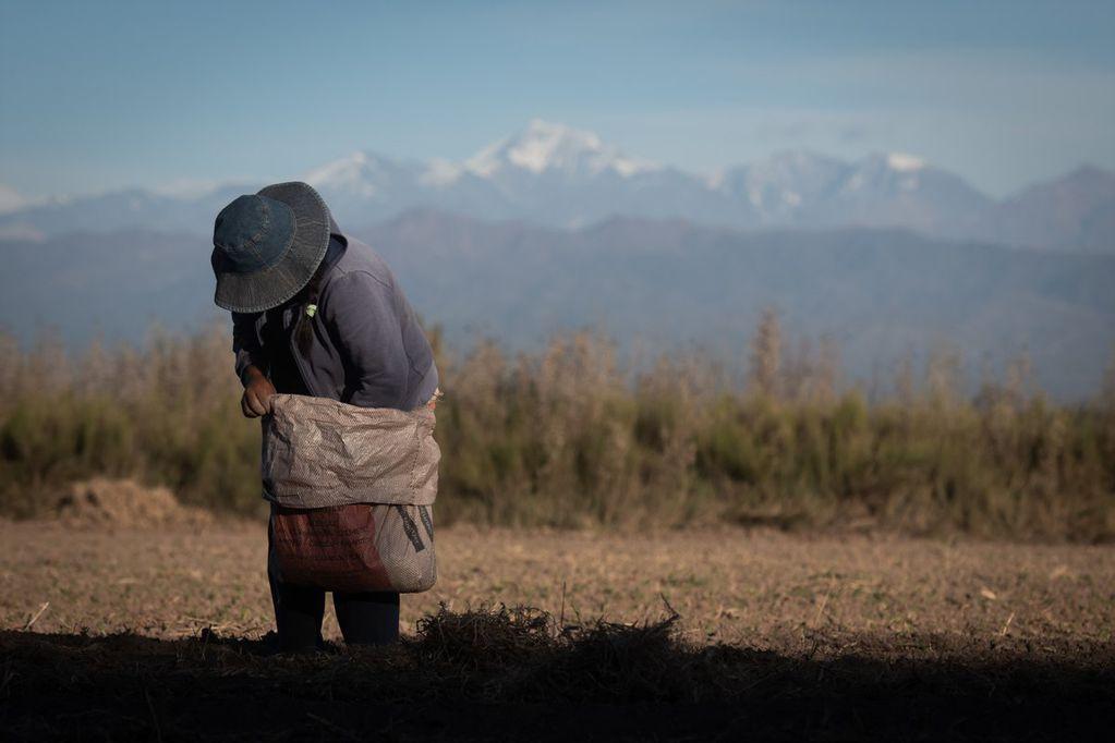 En el año 2020-21, se realizaron 289 inspecciones y se redactaron 18 actas de explotación laboral. Foto: Ignacio Blanco / Los Andes