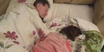 Duerme en el sofá para acompañar a su perro viejito, que ya no puede subir las escaleras