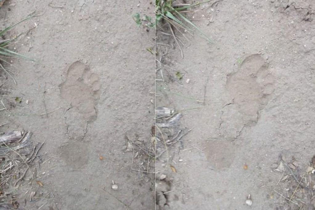 Insólito: la Policía ambiental busca a un supuesto gorila extraviado en San Luis