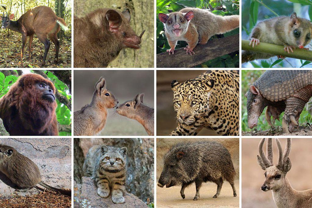 Animales en riegos de extinción son una parte de los problemas que enfrente la biodoversidad del país.