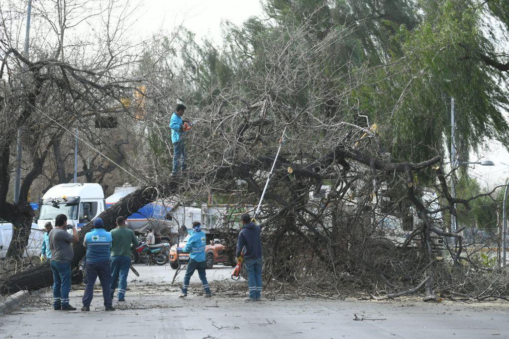 Fuertes ráfagas de vientos en el Gran Mendoza provocaron la caída de árboles en Costanera y Buenos Aires de Ciudad
