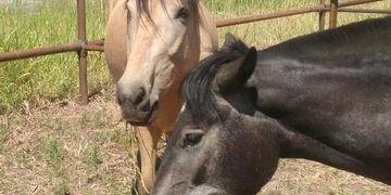 Robaron dos caballos de una Bodega de Luján