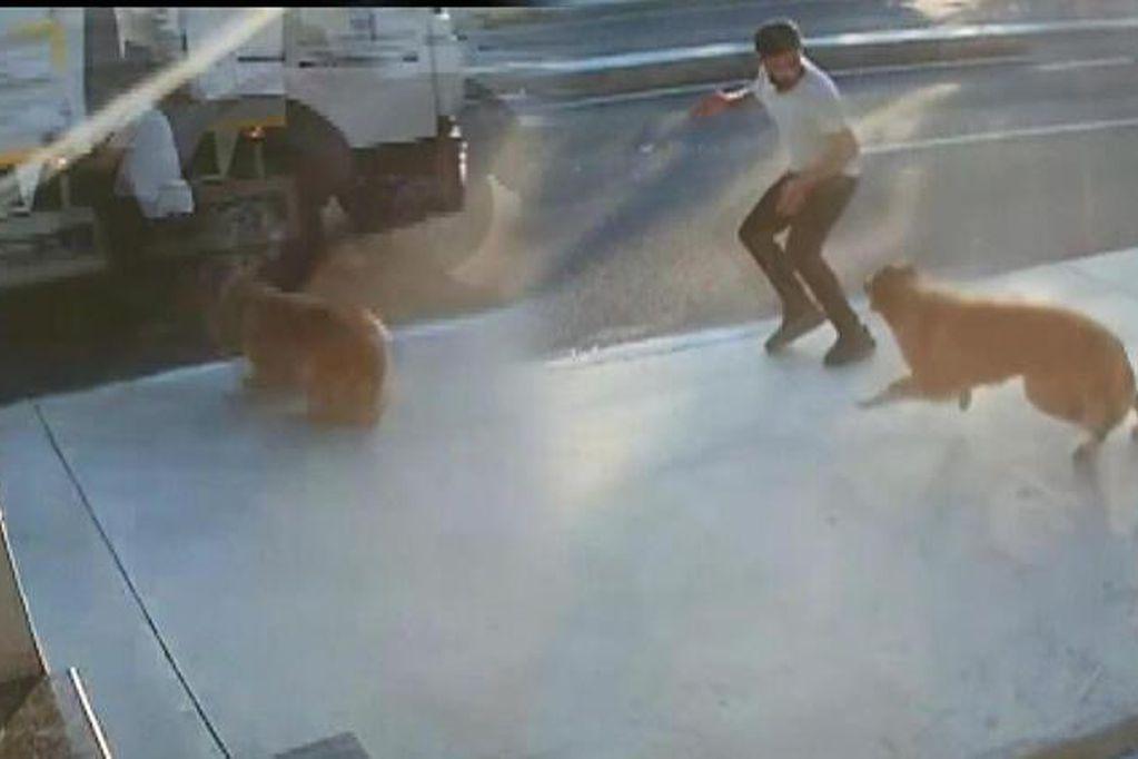 Video: un perro le ladró cuando caminaba por la vereda, corrió hacia la calle y lo atropelló un camión
