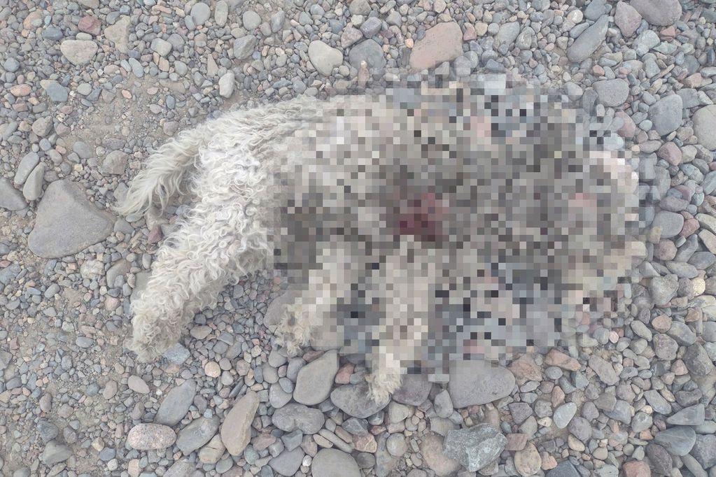 Los dueños de Toby lo encontraron muerto en la calle - Facebook