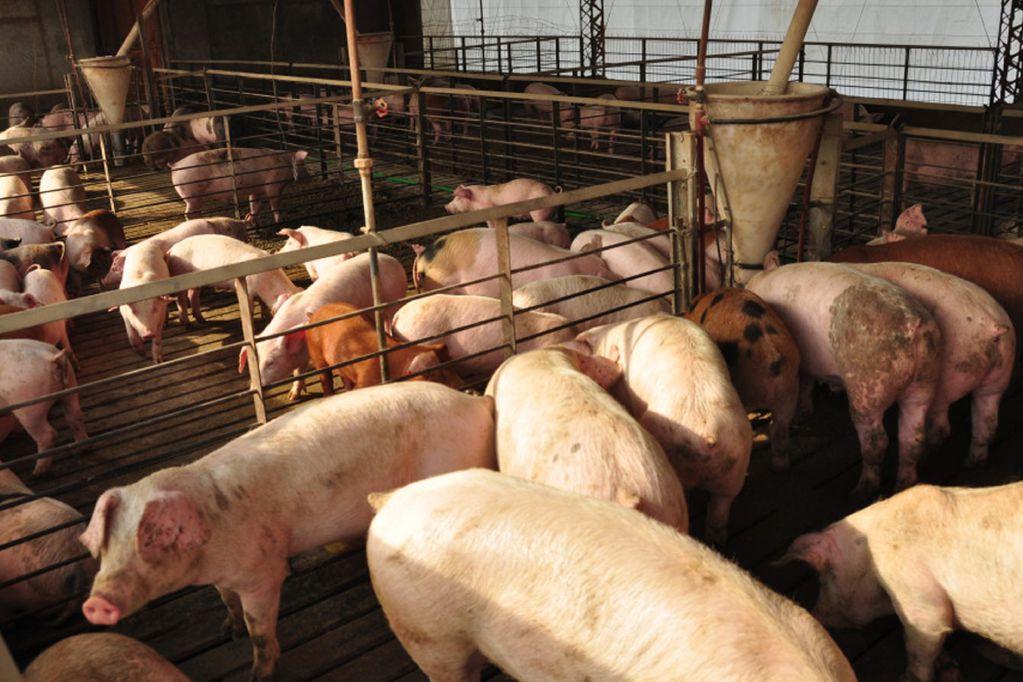 La producción porcina está acabando con los paisajes afrodisiacos de la Península de Yucatán  en México