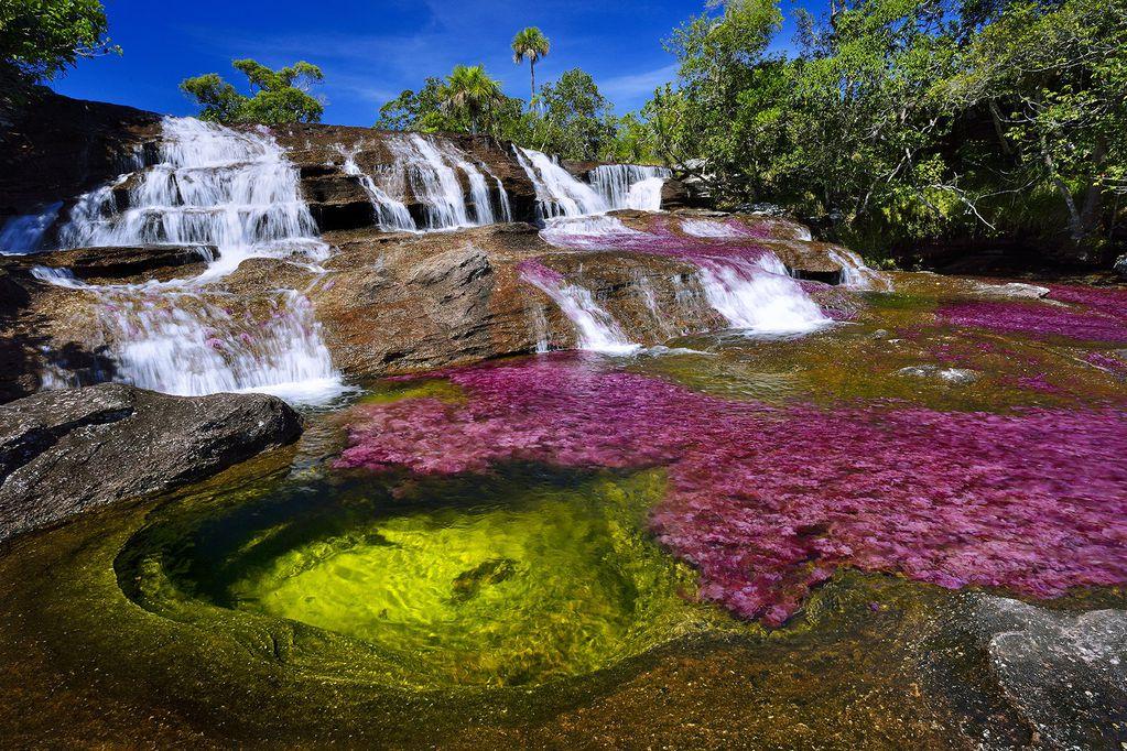 Los particulares colores del río Caño Cristales se deben a una planta acuática endémica llamada Macarenia clavigera, que florece entre junio y diciembre y danza en las aguas jugando con los rayos solares.