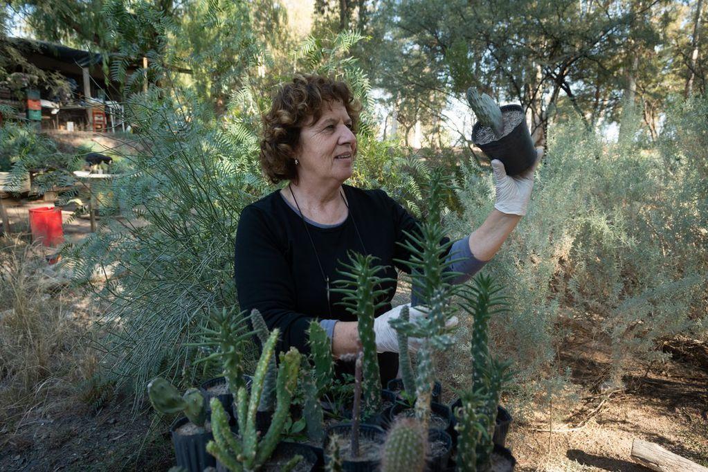 Asociación Gestión Nativa. Paca Llompart selecciona plantines para la venta. Es una Asociación llevada adelante por mujeres en y para departamento de Las Heras en la cual producen plantas nativas para restaurar el ecosistema afectado por la industria o el sr humano. Foto: Ignacio Blanco / Los Andes