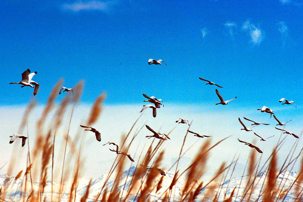 """De la ciudad """"respirable"""" a la ruralidad sustentable - Por Eduardo A. Sosa"""
