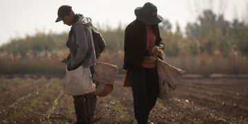 Precariedad laboral en el campo mendocino