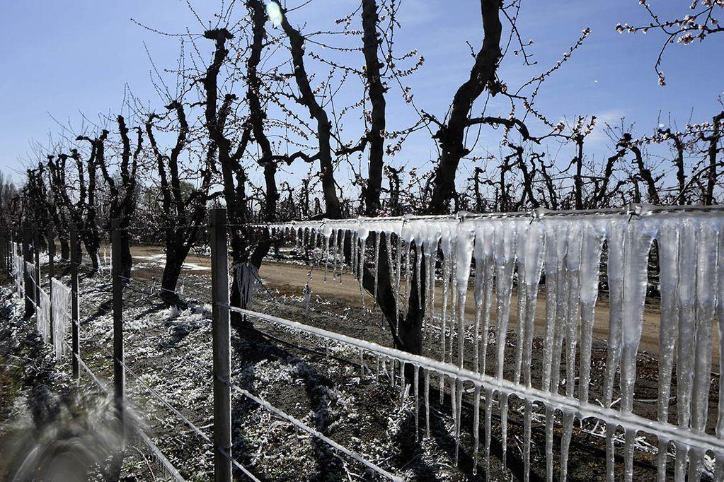Durante los próximos días se esperan heladas para las primeras horas de la mañana en los oasis mendocinos.  Foto: Claudio Gutierrez  Los Andes