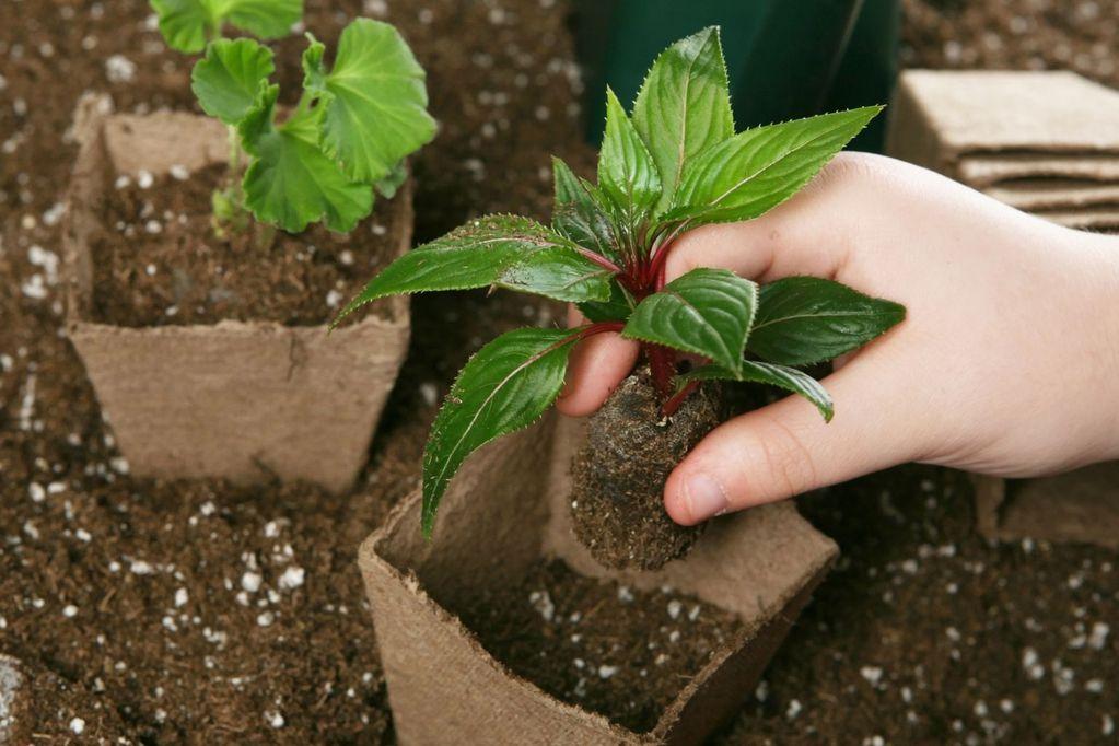 Consejos para elegir la planta correcta