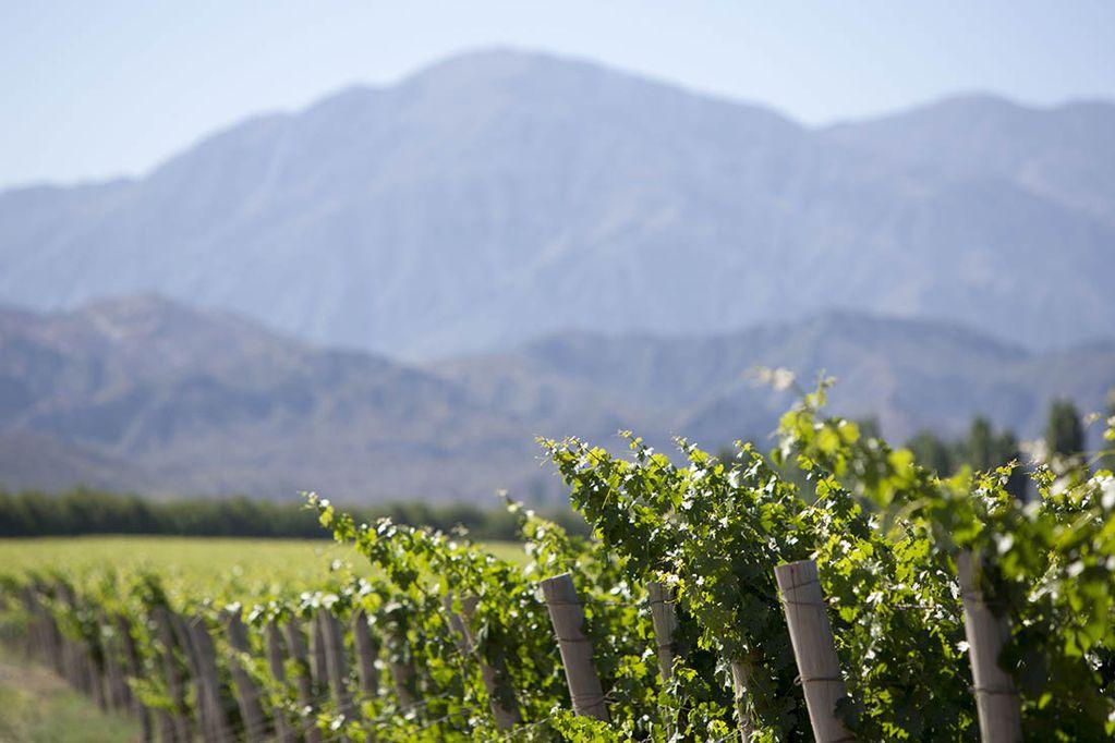 Una empresa anunció que recibirá Bitcoin para la compra de viñedos en Mendoza