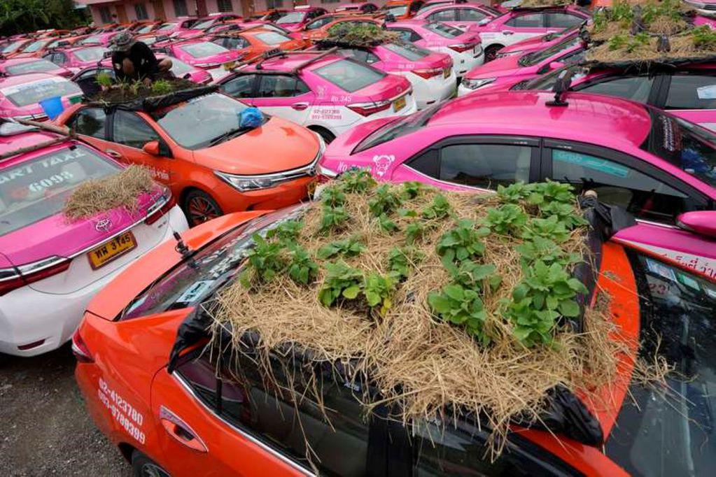 Plantas en los techos de los taxis en Tailandia. Foto: Sakchai Lalit / AP