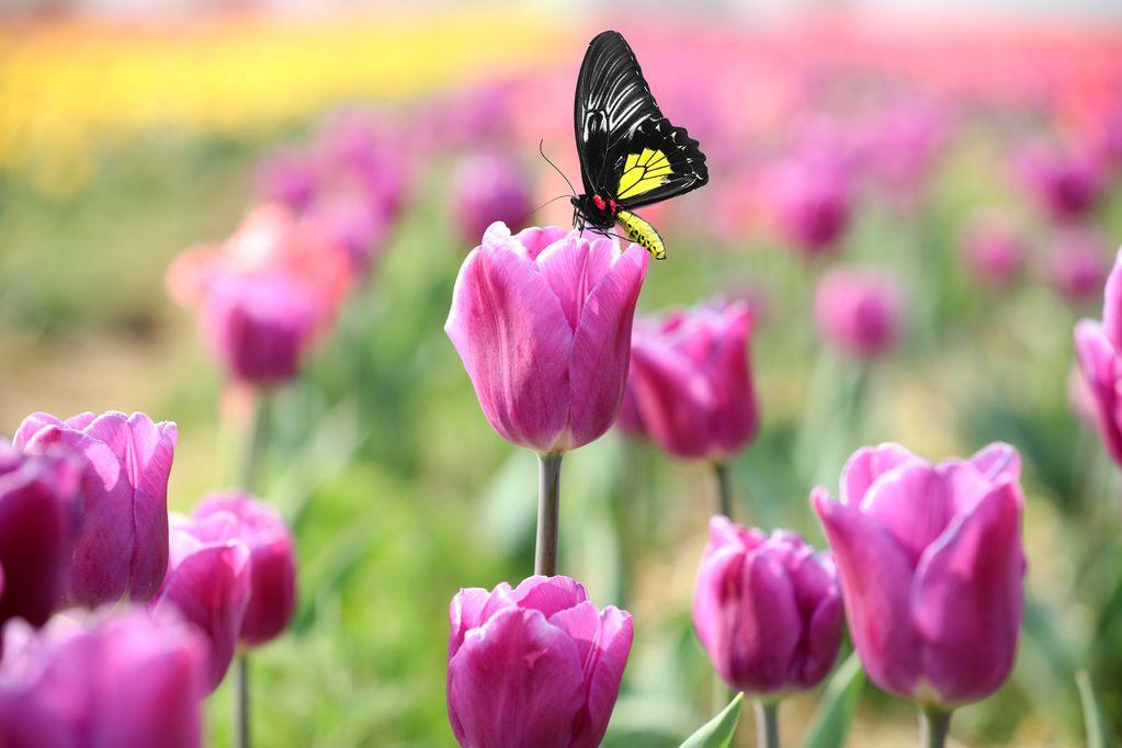 En esta época podés plantar narcisos, jacintos, allium, marimoñas, anemonas, crocos, fresias... Y en provincias patagónicas y otras zonas frías, también tulipanes y otras flores preciosas.