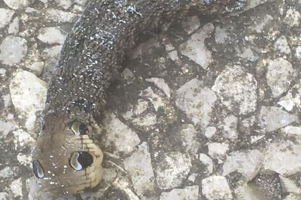 Dos ancianos encontraron un raro espécimen en su jardín y aseguraron que tenían que quemar todo.