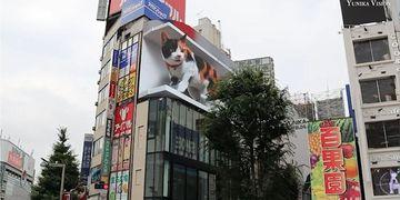Gato gigante en Tokio