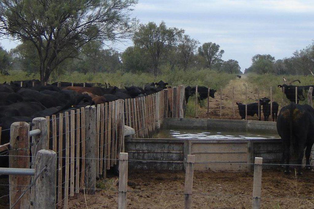 Desde hace varios años los productores ganaderos vienen solicitando mejoras en la infraestructura que rodea a los campos. / Foto: Gentileza