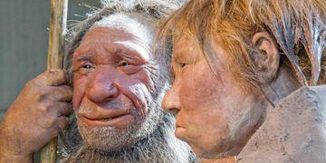 Tener una idea firme sobre cuándo desaparecieron estos antepasados más cercanos del Homo Sapiens es considerado un primer paso esencial para entender su naturaleza y capacidades. (AP)
