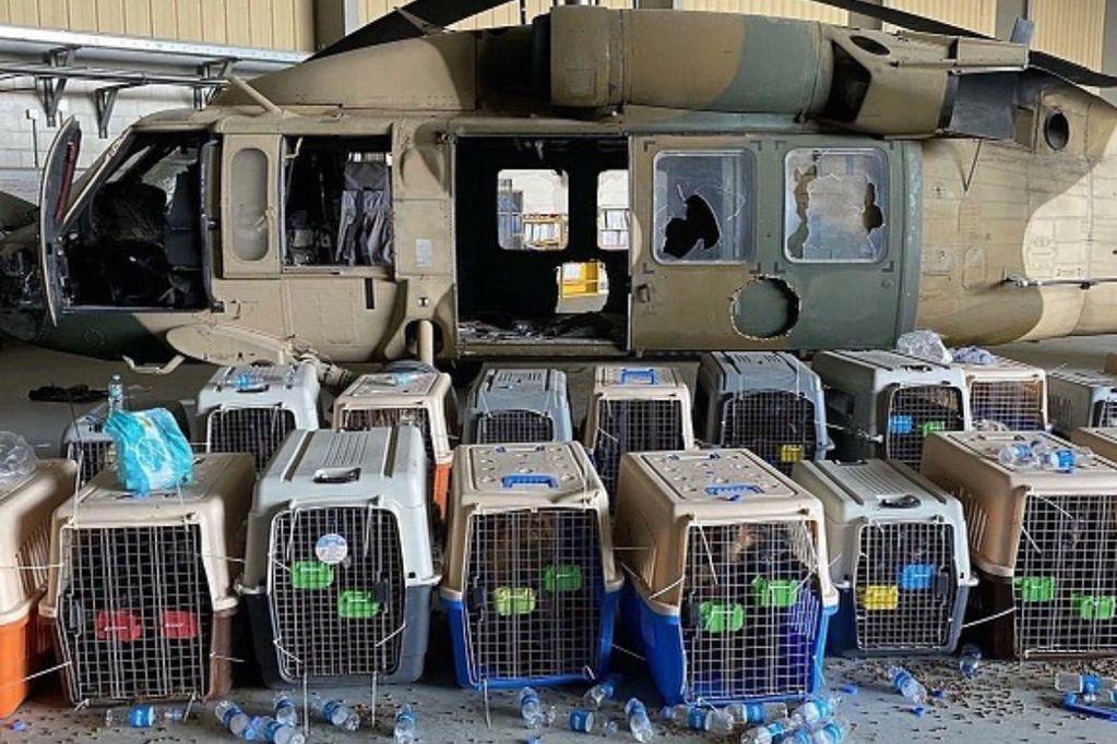 Perros abandonados en el aeropuerto de Kabul (@perezreverte).