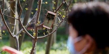 celulares en los árboles